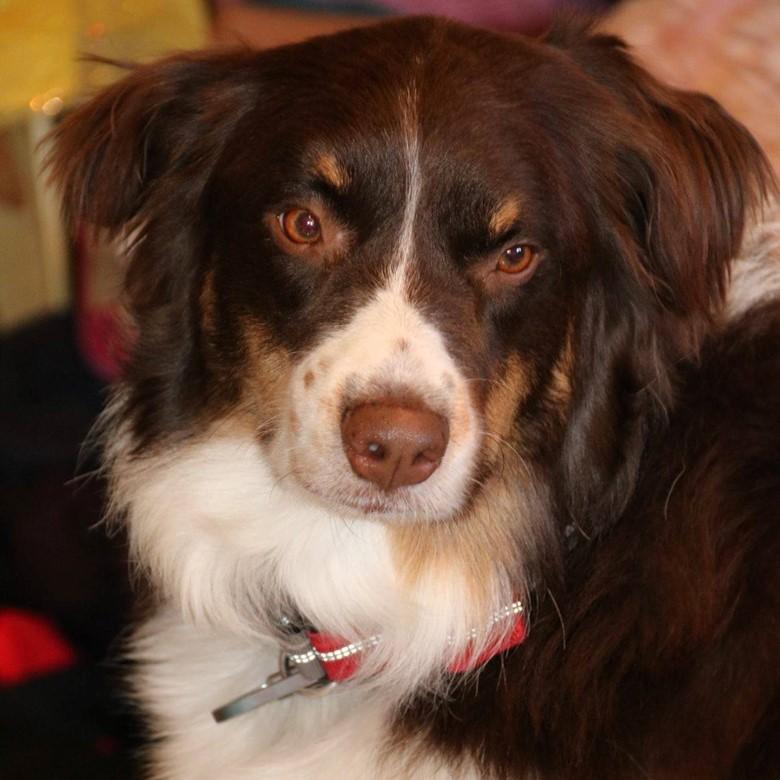 Ruffwear quickdraw dog collar