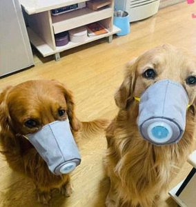 masks on your canine during covid